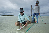 "Clare Keating Daly and Ryan Daly, marine biologist and research director of the Arros research center of the ""Save our seas"" foundation catching a young Blacktip reef shark (Carcharhinus melanopterus), St Joseph's Atoll, Seychelles"