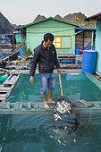 Man feeding his fish with fish caught at sea, floating village of Lan Ha Bay, Vietnam