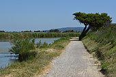 Canal de la Robine between Narbonne and Port-la-Nouvelle, Regional Nature Reserve of Saint Lucia, Occitania, France