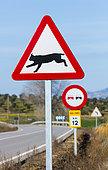 Ibeerian lynx (Lynx pardinus), Traffic signal, Badajoz, Extremadura, Spain, Europe
