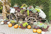 Cart decorated for Halloween in autumn, Germany.