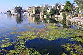 Pollution and proliferation of green algae on Lake Pichola in Udaipur due to domestic discharges, wastewater and miscellaneous household waste, Rajasthan, India