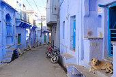 Chien dans une rue aux maisons aux façades bleue dans la ville de Bundi, Rajasthan, Inde