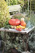 Havest of organic vegetables in a kitchen garden