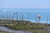 Oysters parks at low tide, village of the Herbe, commune of Lège Cap Ferret, Gironde, Basin of Arcachon, France