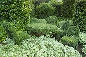 Plant furniture (Lonicera ?), Jardins du Pays d'Auge, Cambremer, Calvados, Normandie, France