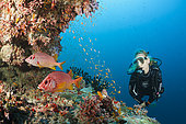 Scuba Diver on Coral Reef, Felidhu Atoll, Maldives
