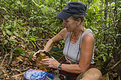 Philippines, Palawan, Roxas, Dr Sabine Shoppe from Katala Foundation holding a critically endangered Philippines forest turtle (Siebenrockiella leytensis) during a Rapid Biodiversity Assessment in Mendoza area