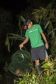 Philippines, Palawan, Roxas, Mendoza, Katala Foundation team raising fresh water turtle traps during a Rapid Biodiversity Assessment in Mendoza area
