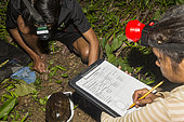 Philippines, Palawan, Roxas, Mendoza, Katala Foundation team measuring a critically endangered Palawan forest turtle (Siebenrockiella leytensis) during a Rapid Biodiversity Assessment in Mendoza area