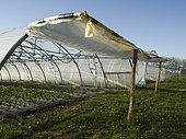 """Greenhouses """"Les jardins de Théia"""", BIO Culture, Jura, France"""