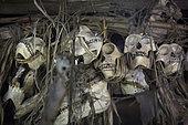 Skulls of monkeys hunted by the owner of the house in a Uma, Pulau Siberut, Sumatra, Indonesia