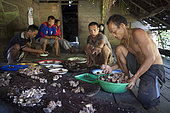 Equal sharing among the clan families of the meat of a wild pig hunted the day before with a spear, Pulau Siberut, Sumatra, Indonesia