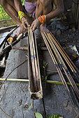 Man applying poison on his arrows before going hunting, Pulau Siberut, Sumatra, Indonesia