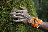 Shaman, apologizing to a tree belonging to the Hopea family, Pulau Siberut, Sumatra , Indonesia
