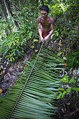 Amanlaeru, 47, preparing some sago palm (Metroxylon sagu) to repair his roof, Pulau Siberut, Sumatra, Indonesia