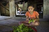 Boka, 13, cleaning ferns before cooking, Pulau Siberut, Sumatra, Indonesia
