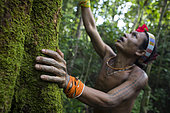 Amantari, 39, a shaman, apologizes to a tree belonging to the Hopea family to tell him that he will need his wood to build a house and that he will soon abbrate it, Pulau Siberut, Sumatra , Indonesia