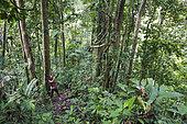 Amantari, 39, hunts with his bow and poisoned arrows, Pulau Siberut, Sumatra, Indonesia