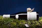 Burgundy Snail (Helix pomatia) on a bottle of Burgundy wine