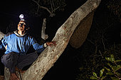 The Honey Nights. Pak Hamsah on a branch next to a nest of Giant honey bee (Apis dorsata), the giant bee of Asia whose geographic area stretches west to east from Pakistan to Bornéo and north to south from the Himalayas to Sri Lanka. Borneo, Indonesia