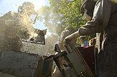 Killers Africanized Honeybees. Les abeilles africanisées ont l'habitude d'attaquer de façon préventive. Elles attaquent en plus grand nombre et suivent leur victime sur des centaines de mètres. Panama