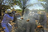 Killers Africanized Honeybees. Eric Tourneret, hard at work, tries to limit the number of bees in front of his lens. Panama