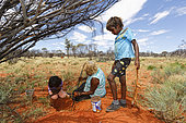 The Honey Ants Dream. The women and the children participate in this harvest on the plains full of mulga trees. The Aborigines locate the honey ants at the foot of the tree by the size and the yellow grooves of the worker ants but also through the discoloration of the ground due to the formic acid with which the ants impregnate their nests and surroundings. The ground thus saturated turns a more orange color. Once the women have found the nest's entrance they dig vertically, following the main tunnel. The honey ants are very placid even if they do have powerful mandibles. Northern Territory, Australia