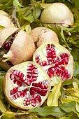 Pomegranate (Punica granatum) 'Provence'