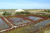 Salt Marsh, Noirmoutier island, Vendée, France