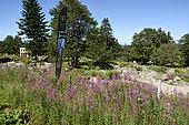 Haut Chitelet altitude Garden, near Hohneck, Hautes Vosges, France