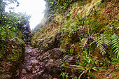 Path of approach of the Volcano of the Soufrière, Guadeloupe