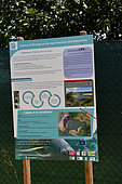 Pond for the reintroduction of the Carribean manatee (Trichechus manatus manatus), Guadeloupe