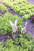 Lapins décoratifs dans un potager au printemps, Pas de Calais, France