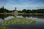 White pond lily (Nymphaea alba), Hoge Veluwe National Park, Netherlands