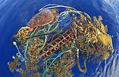 Loggerhead sea turtle (Caretta caretta). Turtle got entangled with garbage. Many of them are dead, this one was alive. It is not a question of a local problem, is universal. Tenerife, Canary Islands.