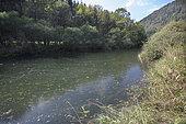 Dessoubre river in a state of eutrophication, Agricultural pollution, Dessoubre, Doubs, Franche-Comté, France