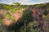 Buraco das Araras (Sinkhole of the Macaws) with Red and Green Macaw or Green-winged Macaw (Ara chloropterus) in flight, Mato Grosso do Sul, Brazil, South America