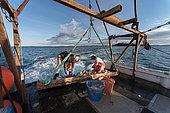 Captaining scallop boat. Cousins Island, Maine