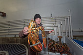 Lobster co-op of Stonington, Maine
