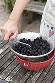 Step by step making of blackberry jam