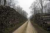 Stockage des grumes le long d'un chemin forestier en hiver, Forêt de la Reine, environs de Toul, Lorraine, France