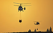 Helicopters in a forest fire. Wildfire. Pine forest (Pinus canariensis). Ifonche 2012, Tenerife. Canary Islands.