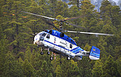 Helicopter in a forest fire. Wildfire. Pine forest (Pinus canariensis). Ifonche 2012, Tenerife. Canary Islands.