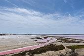 Red salt marshes at Salins-de-Giraud, Camargue, France