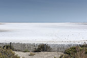 Salty and dry marsh, Camargue, France