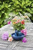 Bouquet of Zinnias on a garden table in summer, Pas de Calais, France