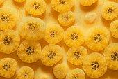 Yellow Boring Sponge (Cliona celata) detail, Around the Island of Oléron, Atlantic Ocean, France