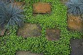 Terracotta path surrounded by Kidney weed (Dichondra repens), Fescue (Festuca glauca) 'Intense blue', Ariege, France