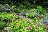 Wild garden with Fortune meadowsweet (Spiraea japonica) 'Shirobana', Fescue (Festuca glauca) 'Intense blue', Aizoon stonecrop (Sedum aizoon), Slate alley, Ariege, France